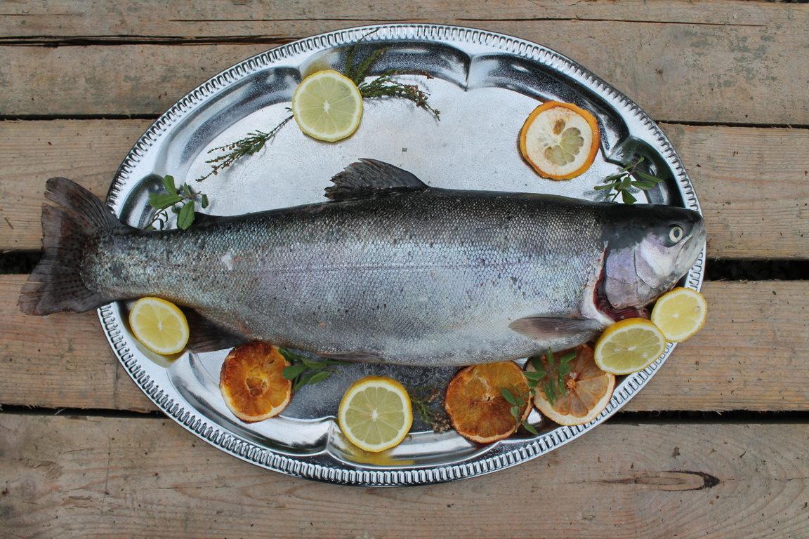 Ungutted trout